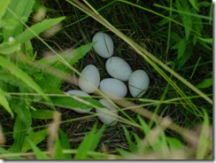 Real nest eggs  :P