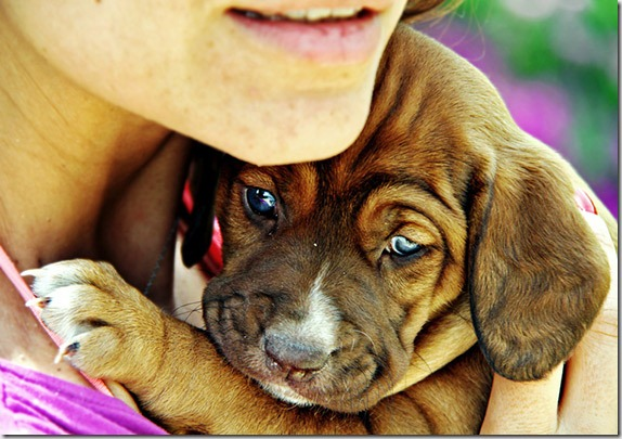 photographing-pets-2