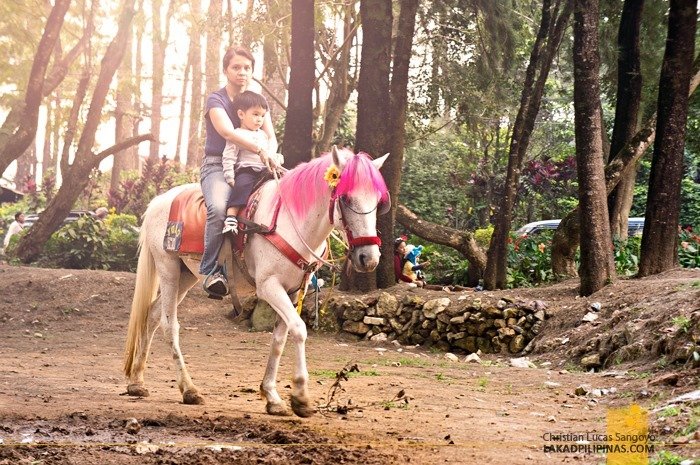 Horse Ride at Baguio City's Wright Park