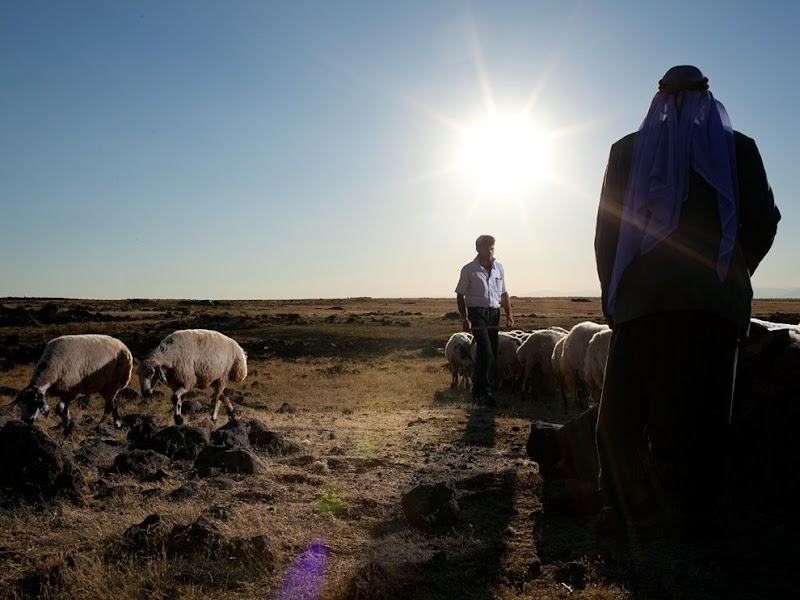 herders-livestock-turkey_37819_990x742.jpg