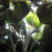 seychelles2_20070412_1279181752.jpg