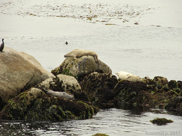 distance seals