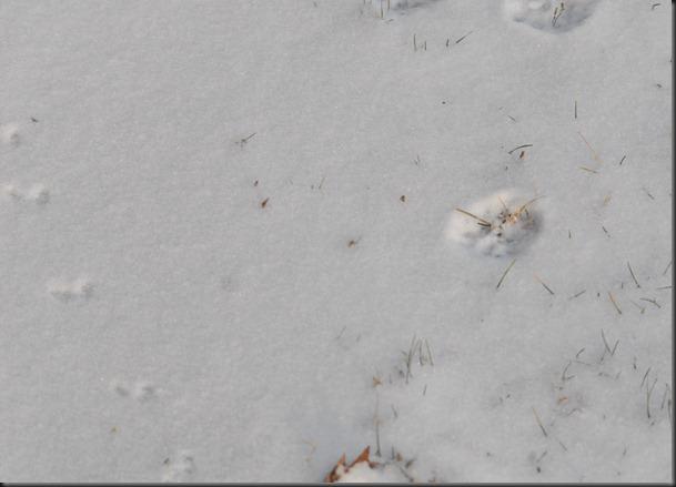 myllykoski jälkiä lumessa 022