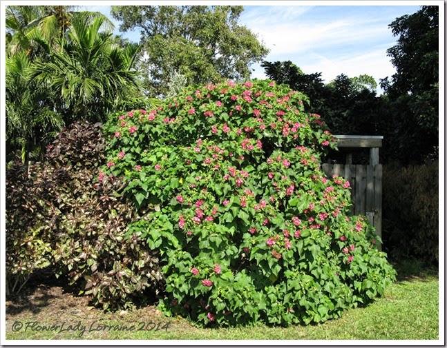 11-20-hydrangea-tree