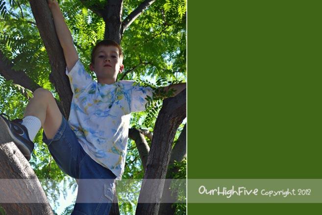 Josh-in-a-tree