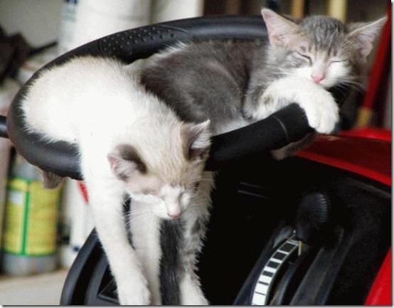 gatitos-durmiendo