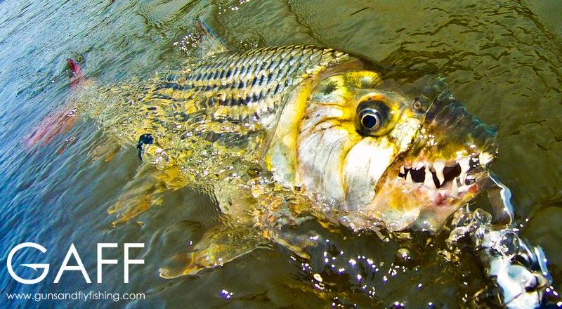 Tigerfish-Fly-Fishing-Barbel-Run-Okavango (8).jpg