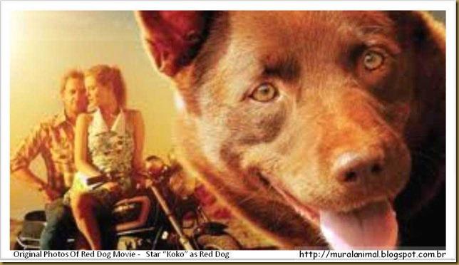 reddog-(7)