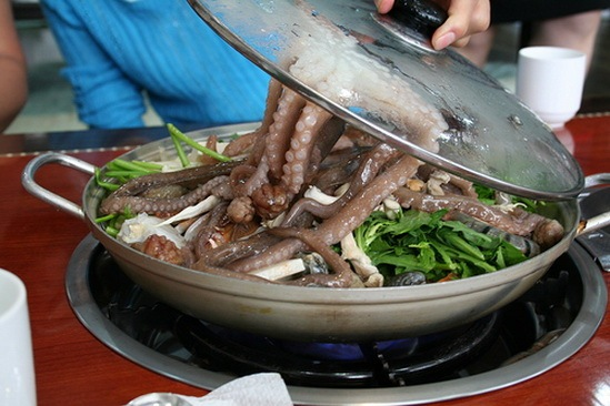 live_octopus_food_korea