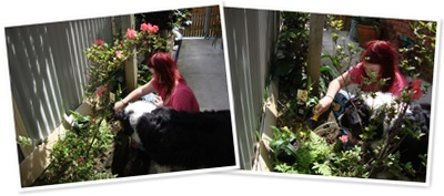 View Bear Gardening