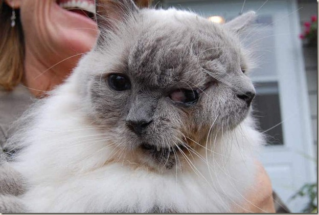 Holy Fuck It's A Cat With Two Faces