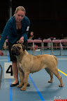 20130510-Bullmastiff-Worldcup-0488.jpg