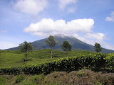 Dempo seen from Pagaralam tea plantations (Daniel Quinn, October 2011)