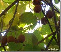 Folhas que vão...Dez 2011