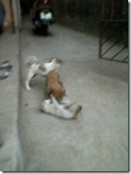 kitten_and_puppies_playing (5)