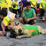 Pet Express Doggie Run 2012 Philippines. Jpg (245).JPG