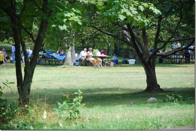08-28-2011 A Shenandoah NP 005