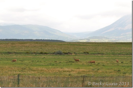 08-07-13 deer near LaVeta 19