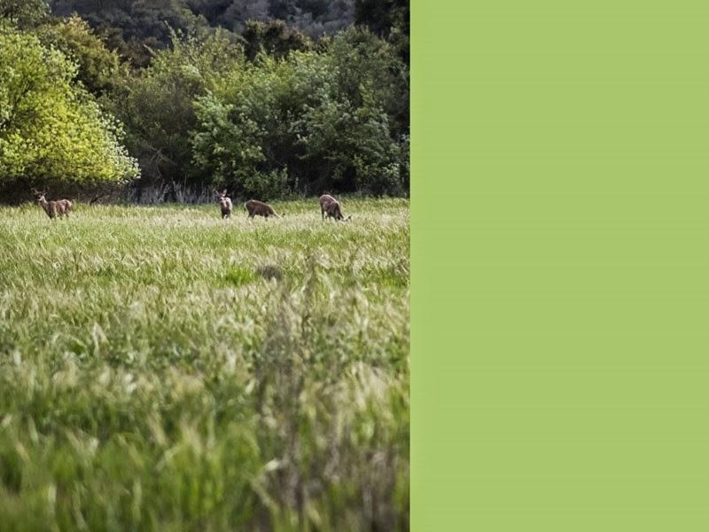 3-deer