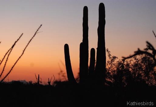 9. saguaro hand-kab