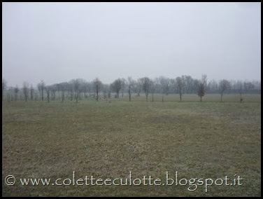 Passeggiata sull'argine dopo la piena - Padulle - 11 gennaio 2014 (36)