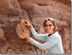 2012-04-15 Petrified Wood, Fry Canyon, UT (83)