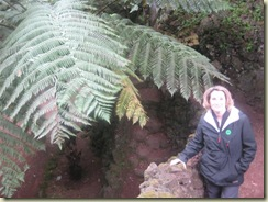 E and giant fern (Small)