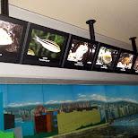 interesting fish on display at the Shinagawa Aquarium in Shinagawa, Tokyo, Japan