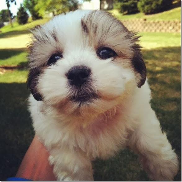 cute-baby-animals-8