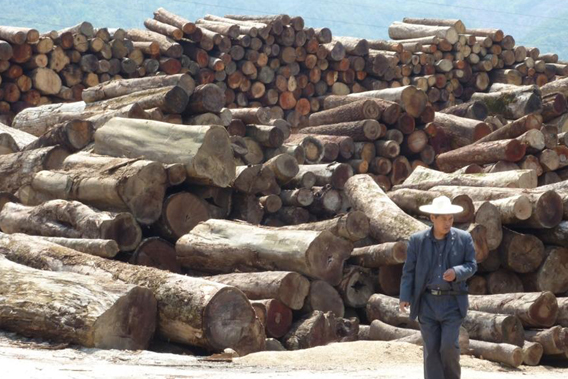 Logs smuggled across the border from Myanmar to China. Photo © EIA via mongabay.com