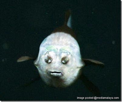 ikan pelik1