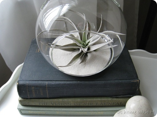 airplant2_athomewithh