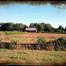 by Nikki Simpson - Landscapes Prairies, Meadows & Fields