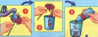 la flor que cambia de color