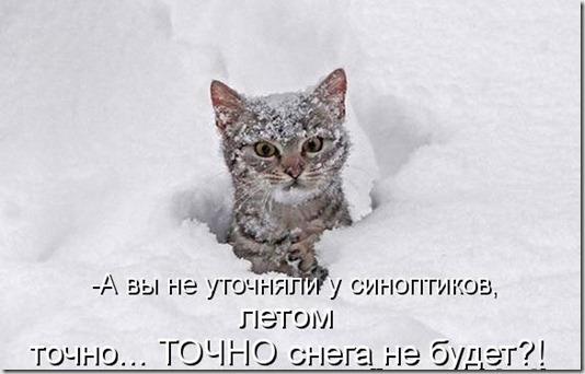 kotomatritsa_eP