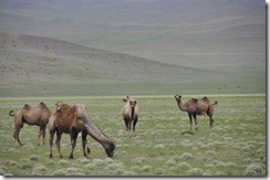 06-29 vers Ulaangoom 007 800X
