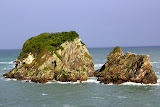 Seal Colony -- Cape Foulwind, New Zealand