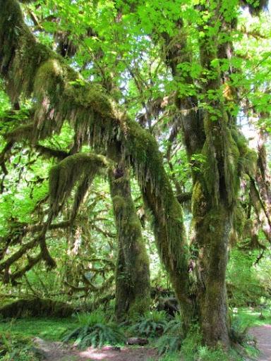 VisitingHohRainForest-10-2014-05-21-20-45.jpg