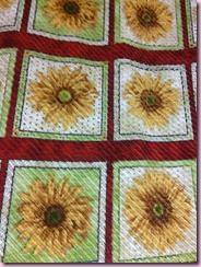 QSD-Cehnille sunflowers