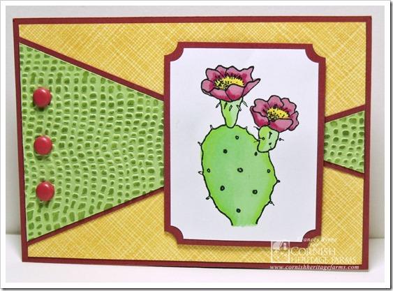 CHF Cactus wm