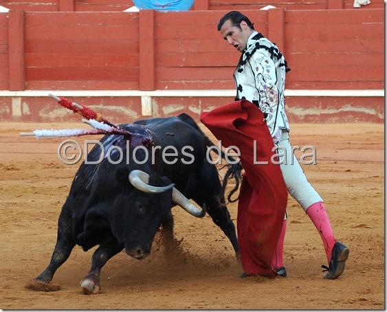 ©Dolores de Lara (88)