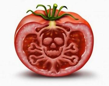 tomato-gmo-monsanto