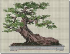 Ricamando online bonsai for Bonsai comprare