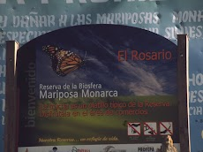 2004 March Mariposa Monarca Michoacan0034.jpg