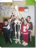 ο σκελετός του σώματος (2)