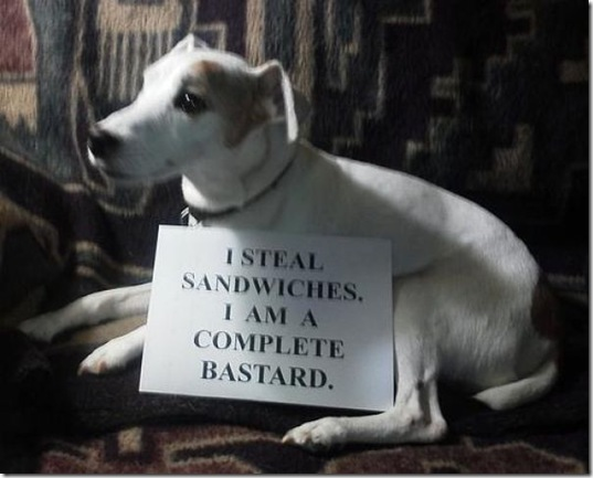 dog-shaming-bad-25