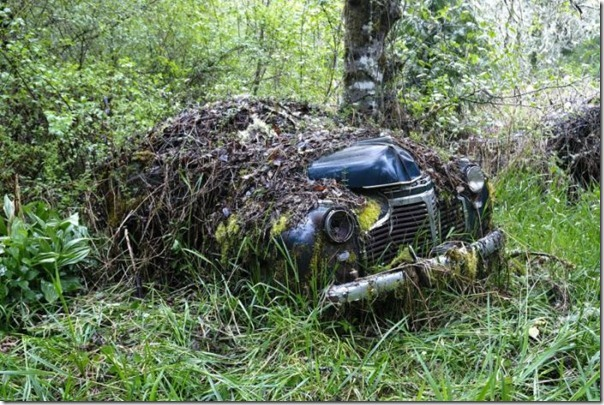 Cemitério de carros na floresta (13)