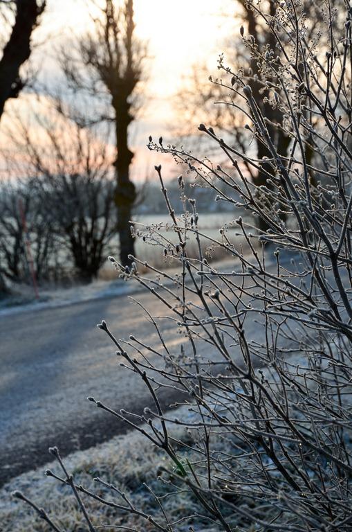 [frost%255B3%255D.jpg]