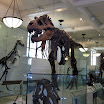 American Museum of Natural History - New York