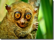 Tarsier-Sanctuary-in-Bohol